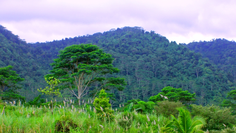 Landscape of Lawiga Datu in Lanao del Norte